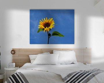 Sonnenblume von Roland Klinge