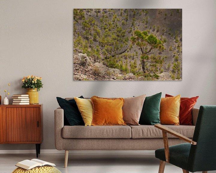 Sfeerimpressie: Dennenbomen in een vulkaankrater van Carola van Rooy