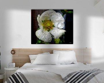 Florale Tränen van Gertrud Scheffler