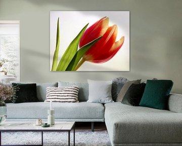 Red Tulip 1 van Marjon van Vuuren