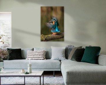 Parende ijsvogels von Eelke Cooiman