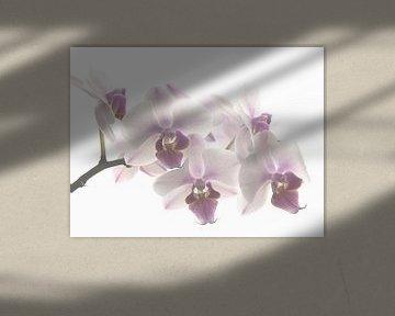 Orchid pastel  van Marjon van Vuuren