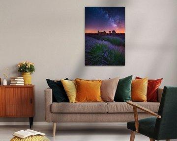 Een Lavendel Nacht von Albert Dros