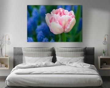Pink tulipa - Keukenhof von Tamara Witjes