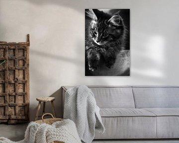 Maine Coon kitten von Ralph van Houten