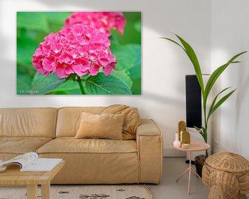 Blume in Pink von Christina Sudbrock