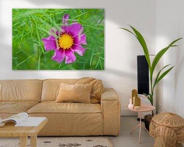 Purple flower von Tamara Witjes
