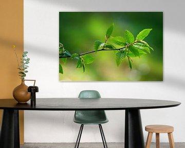 Grüne Blätter von Bojan Radisavljevic