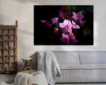 Pink Blume van Bojan Radisavljevic