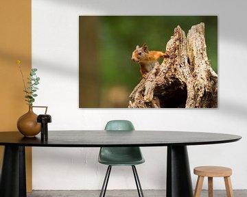 Eichhörnchen auf Baumstumpf von Marianne Jonkman