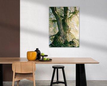 Tree Magic 137 van MoArt (Maurice Heuts)