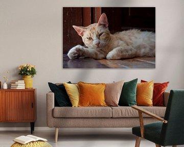 Luie kat von MattScape Photography