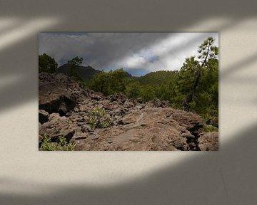 Vulkanisch landschap met dennen.