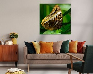 Gele Uil Vlinder van Martin Helmich