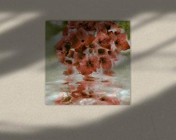 Hortensienspiegel - pink pastell von Christine Nöhmeier