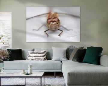Eyecontact dragonfly von Tamara Witjes