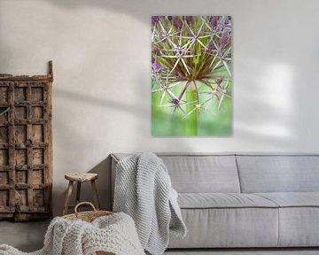 Allium christophii von Tamara Witjes