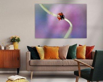 Lieveheersbeestje op bloemsteel  van Tamara Witjes