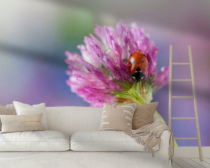 Sfeerimpressie behang: Lieveheersbeestje op rode klaver van Tamara Witjes