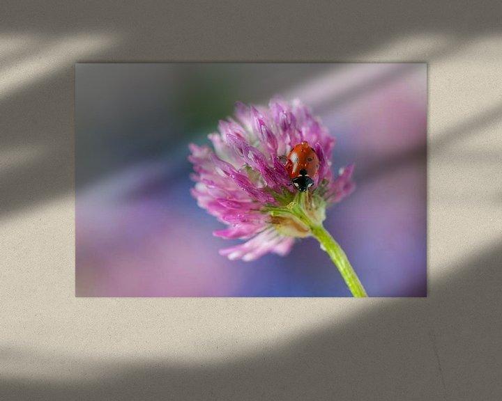 Sfeerimpressie: Lieveheersbeestje op rode klaver van Tamara Witjes