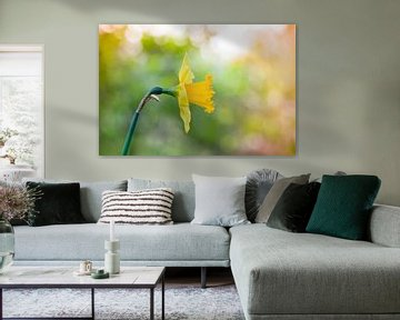 Narcis (Narcissus) van Tamara Witjes