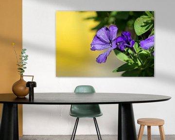 Lila Blumen von Coosje Wennekes