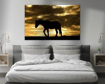 Horse during sunrise