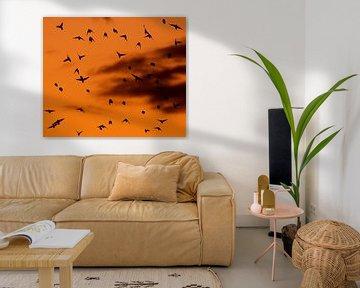 Birds van Anne Koop