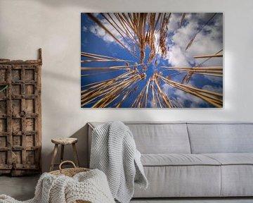 Abstract: Geel riet tegen blauwe lucht van piet douma