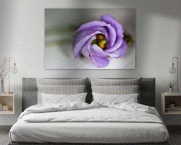 Liegende violette Blume auf dem Tisch von Eveline Eijlander