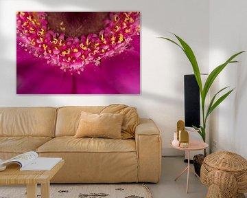 Roze gerbera van Eveline Eijlander