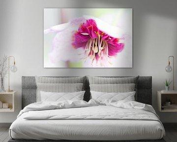 Roze hangende bloem van Eveline Eijlander