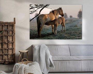 Konik horses van Anne Koop