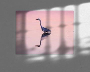 Blauwe Reiger bij ondergaande zon van Henk Goossens