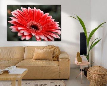Rode bloem von Stedom Fotografie