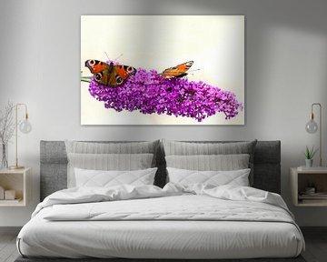 Dagpauwoog vlinders op een vlinderstruik. van Greet ten Have-Bloem