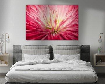 Roze madeliefje (Bellis perennis) von Tamara Witjes