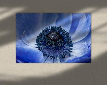 Blauwe anemoon (Anemone 'Mistral') van Tamara Witjes