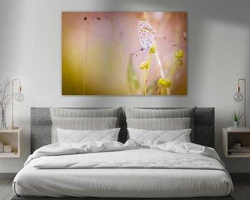 Icarusblauwtje vlinder op bloem
