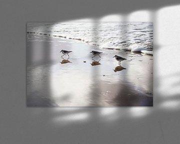 Strandlopertjes op strand von Ria Peene
