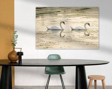 Twee zwanen in het water van Merijn van der Vliet
