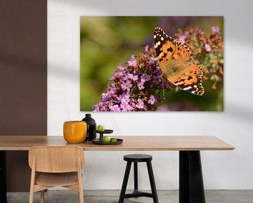 Distelvlinder op een vlinderstruik