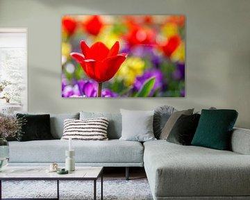 Bloemen in keukenhof van Ramon Bovenlander