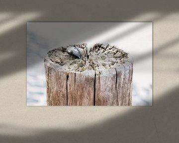 Paal met mossel met basalt zeewering van Ria Peene