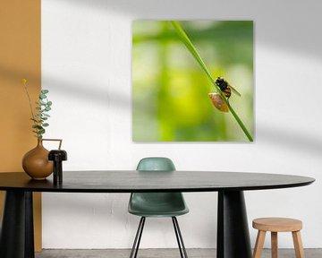Samen delen, een vlieg en een slakje op dezelfde groene grasspriet