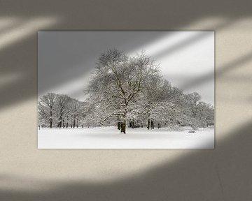 Besneeuwd winterlandschap van Merijn van der Vliet