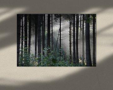 Zonnestralen in mysterieus sprookjesachtig bos van Ronald H