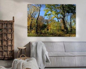 Kleurrijk herfstbos van Merijn van der Vliet