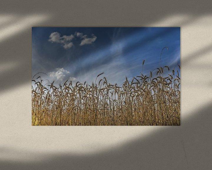 Sfeerimpressie: Korenaren onder een blauwe hemel van Frans Blok