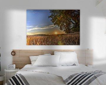 Zonsondergang boven het korenveld